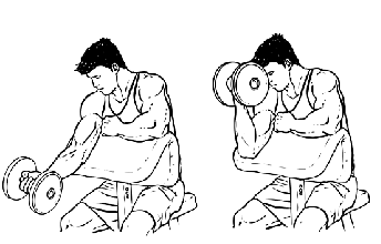 Image:Bicept curl.png