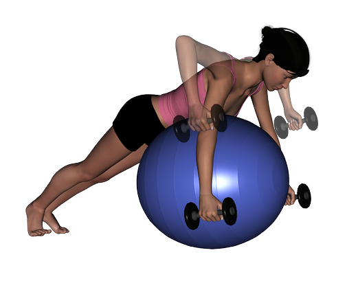 Image:Stability-Ball-Prone-Bilateral-Dumbbell-Row.png