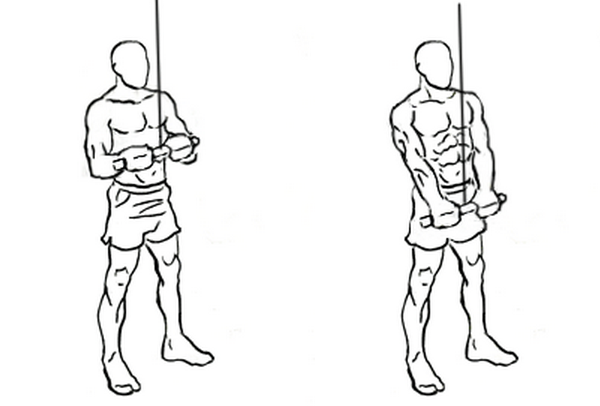 Image:Triceps-Pushdown.png