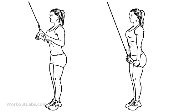 Image:Triceps_Pushdown1.png