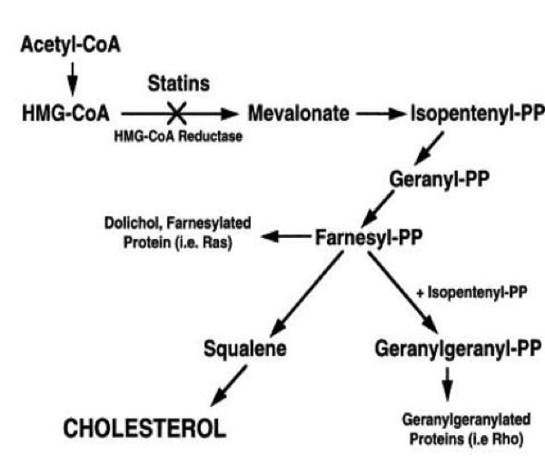 Biochemical pathway of cholesterol synthesis and effect of statins on pathway.