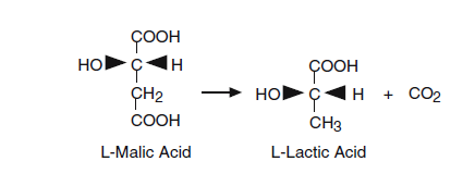Conversion of malic acid to lactic acid by malolactic fermentation