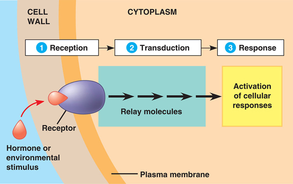 General movement and reactions through a signal transduction pathway.