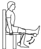 Image:Seated-leg-curl.jpg