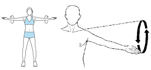 Shoulder Circumduction. Taken from: http://content.answcdn.com/main/content/img/oxford/Oxford_Sports/0199210896.circumduction.1.jpg